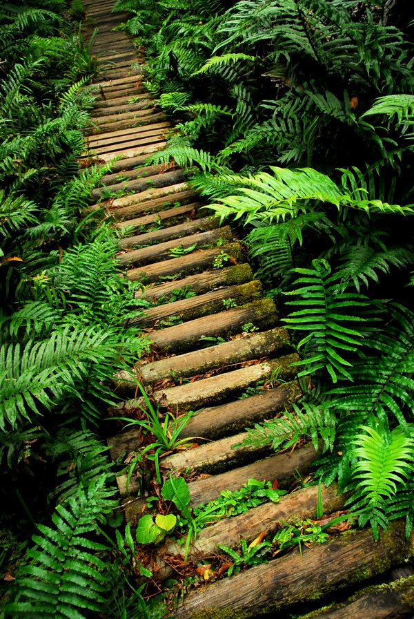 ♂ This Path Laid Before You by `strangledbyart A green trail somewhere within the massive Tsitsikamma National Park in the eastern cape of South Africa.