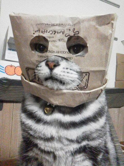 I iz a cat burger-ler