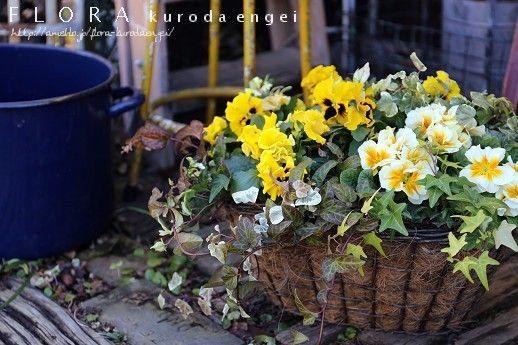 パンジーとプリムラの黄色い寄せ植えの画像   フローラのガーデニング・園芸作業日記