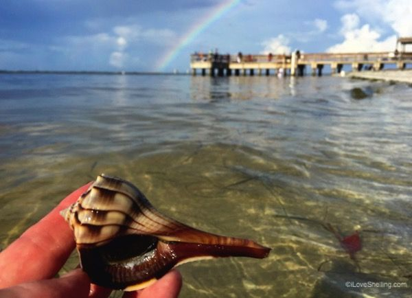 970 best images about beach life florida on pinterest for Sanibel fishing pier
