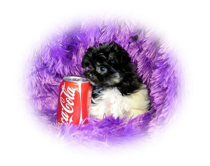 "Lilliana enjoying her daily coke (just kidding) from ""Dakota Mi-Kis"" www.dakotamikis.com"