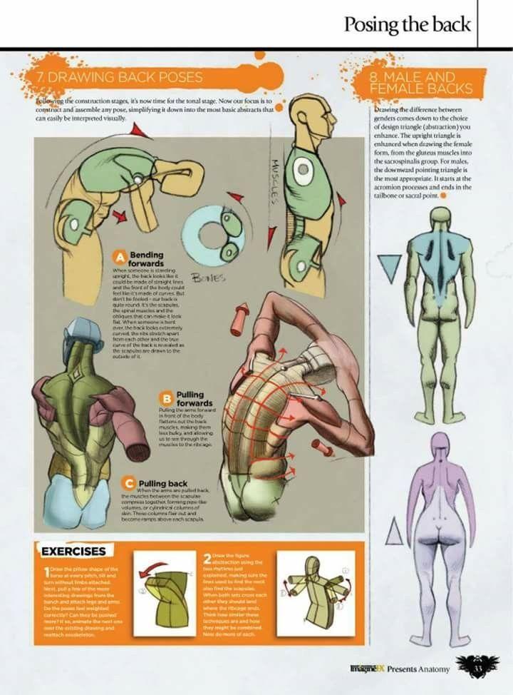 252 besten Body/Anatomy Bilder auf Pinterest | Zeichen, Drawing und ...