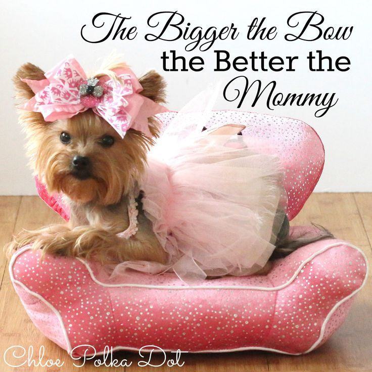 teacup yorkie clothes 25 best ideas about teacup yorkie on pinterest yorkie 4410