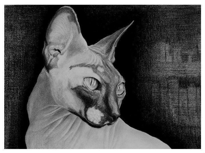 Sphinx - Realistic drawing https://www.facebook.com/StefanMarcuArt
