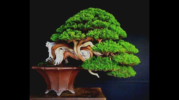 Asian  bonsai   exhibition   and   fish   koi  ,suiseki  2018