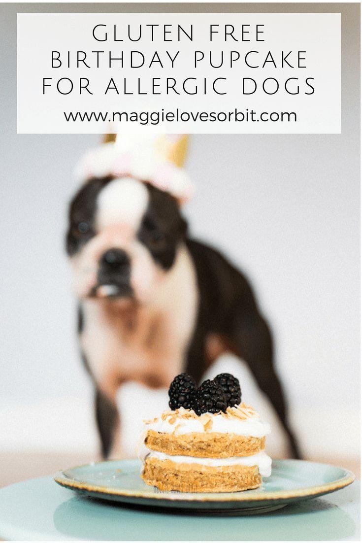 Happy Birthday Orbit – I can't believe you're Two   Dog birthdays ...