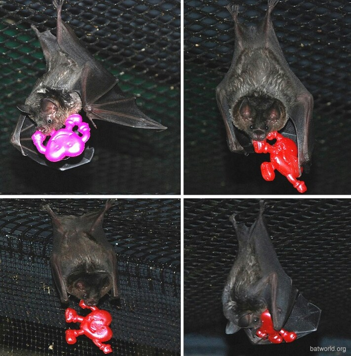Playing with their Valentine's Day toys at Bat World ...