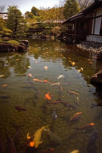 19 best images about garden ideas on pinterest gardens for Goldfish pond designs