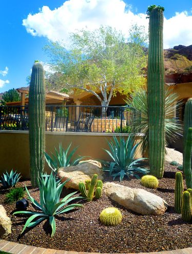 438 best Desert landscaping ideas images on Pinterest Desert
