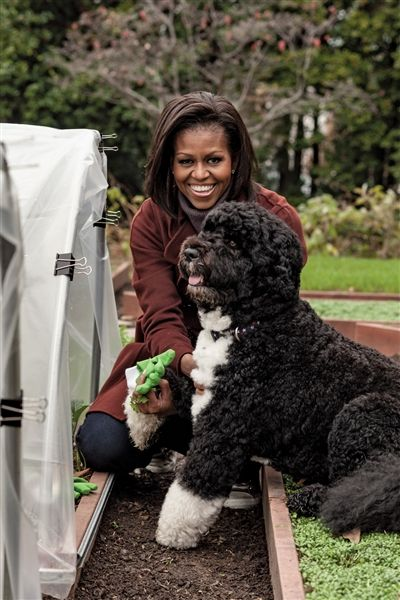 "First Lady Michelle Obama and ""First Dog"" Bo Obama in their White House garden"
