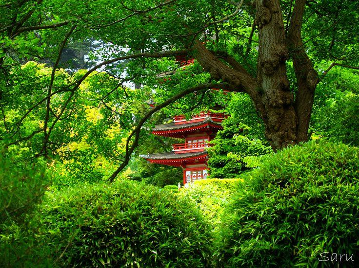 San Francisco Japanese Tea Garden...