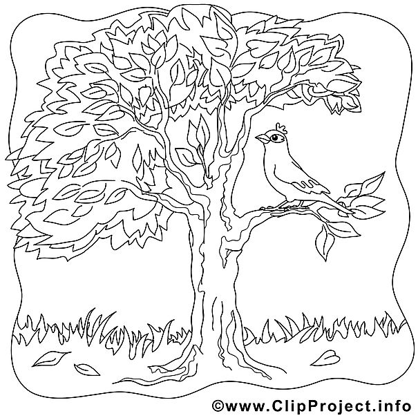 Baum Im Herbst Bild Ausmalbilder Gratis Ausmalbilder Gratis Malvorlagen Ausmalbilder