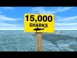 Sign Announcing Sharksnot Sure But Think This Is From Year 2015 Florida BeachesIn