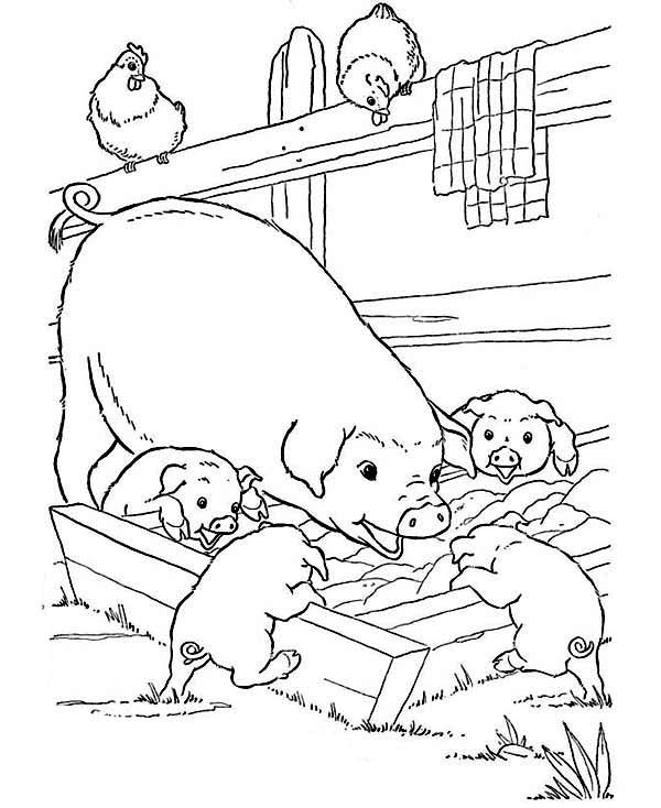 Mother Pig And Her Babies Are Eating On Farm Animal Coloring Page Kids Play Color Farm Animal Coloring Pages Farm Coloring Pages Animal Coloring Pages