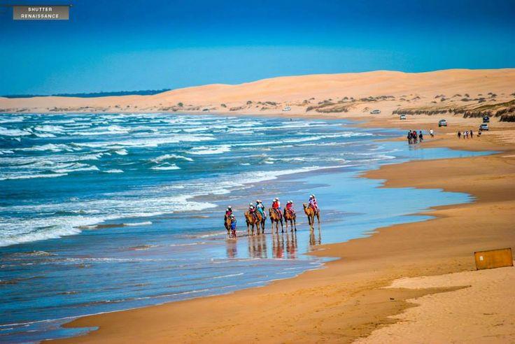 Australia # coastal ~ Camel riding at Port Stephens, NSW ~ Shutter Renaissance