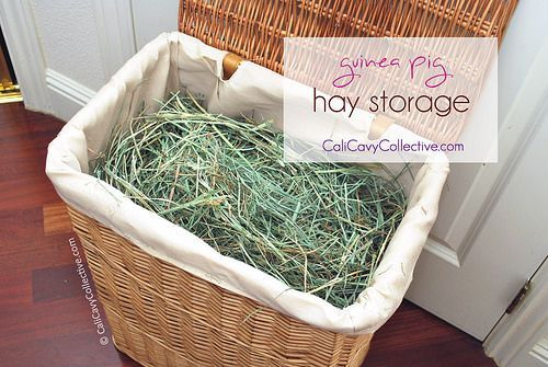 Tip: store your guinea pig's hay in a wicker laundry hamper. Functional and much better looking than leaving it in a dusty cardboard box.