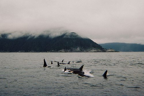 whale watching in washington state cant wait :)