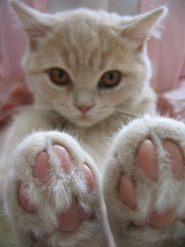 Кошачьи Лапы — Котики правят интернетом