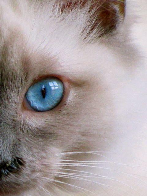 Eleonora Beltrame - Cat