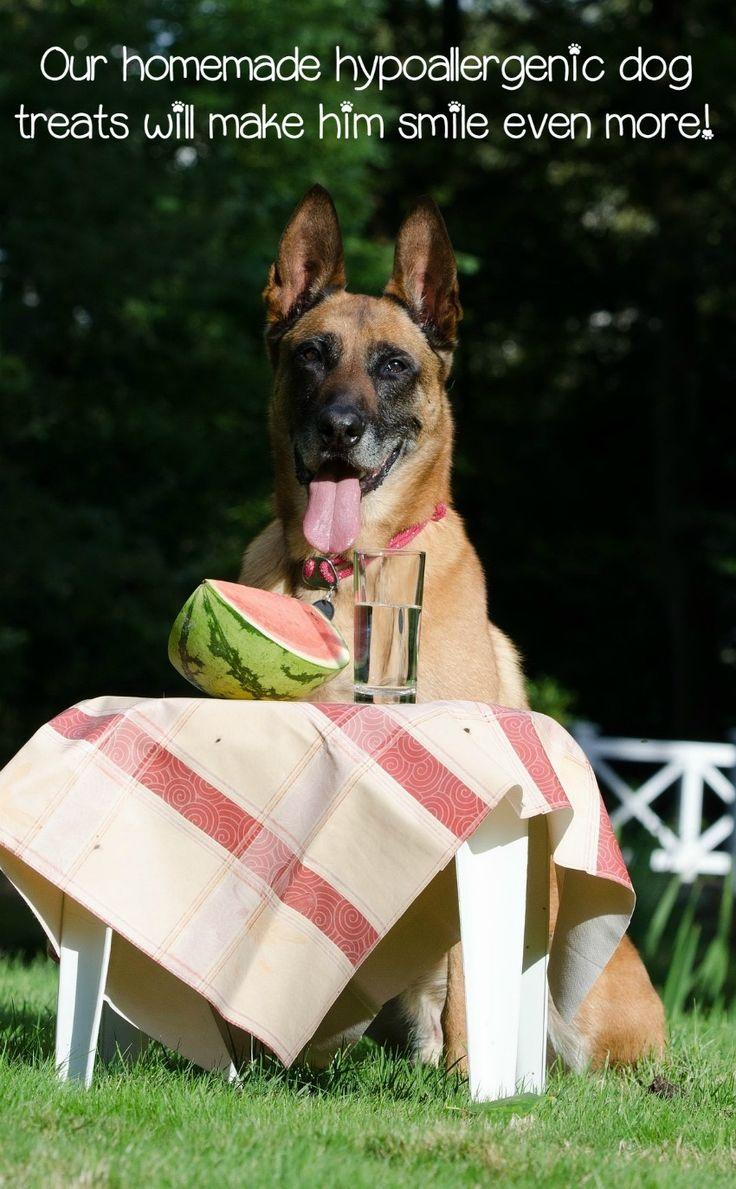 Bien-aimé Les 25 meilleures idées de la catégorie Gâteries pour chiens  DI24