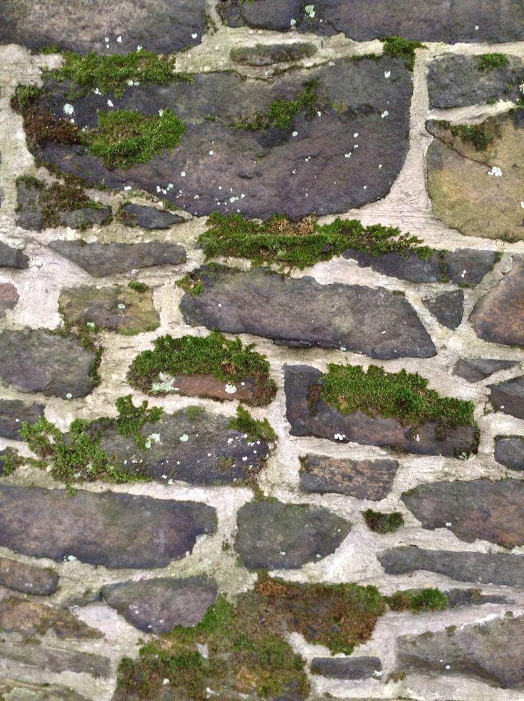 Moss growth in between rocks