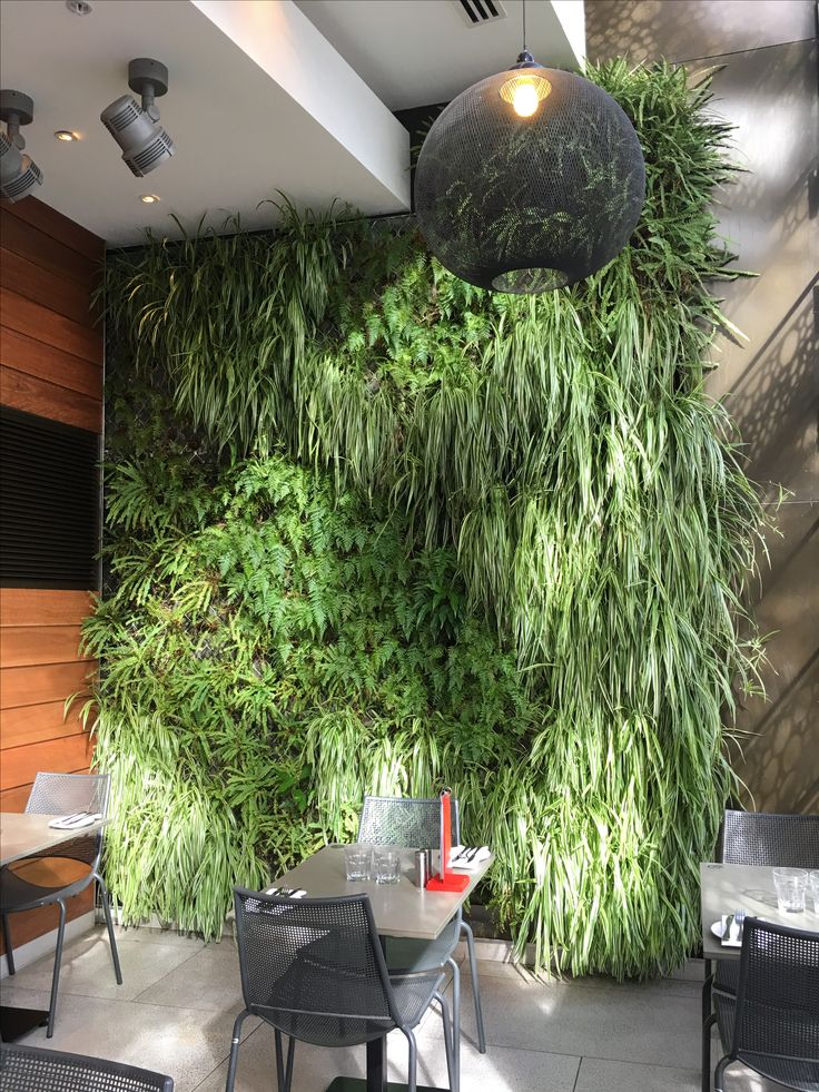 Living wall featured in restaurant at crown. This was one of the very first living walls in Melbourne in a commercial setting which soon found its way into residential interiors