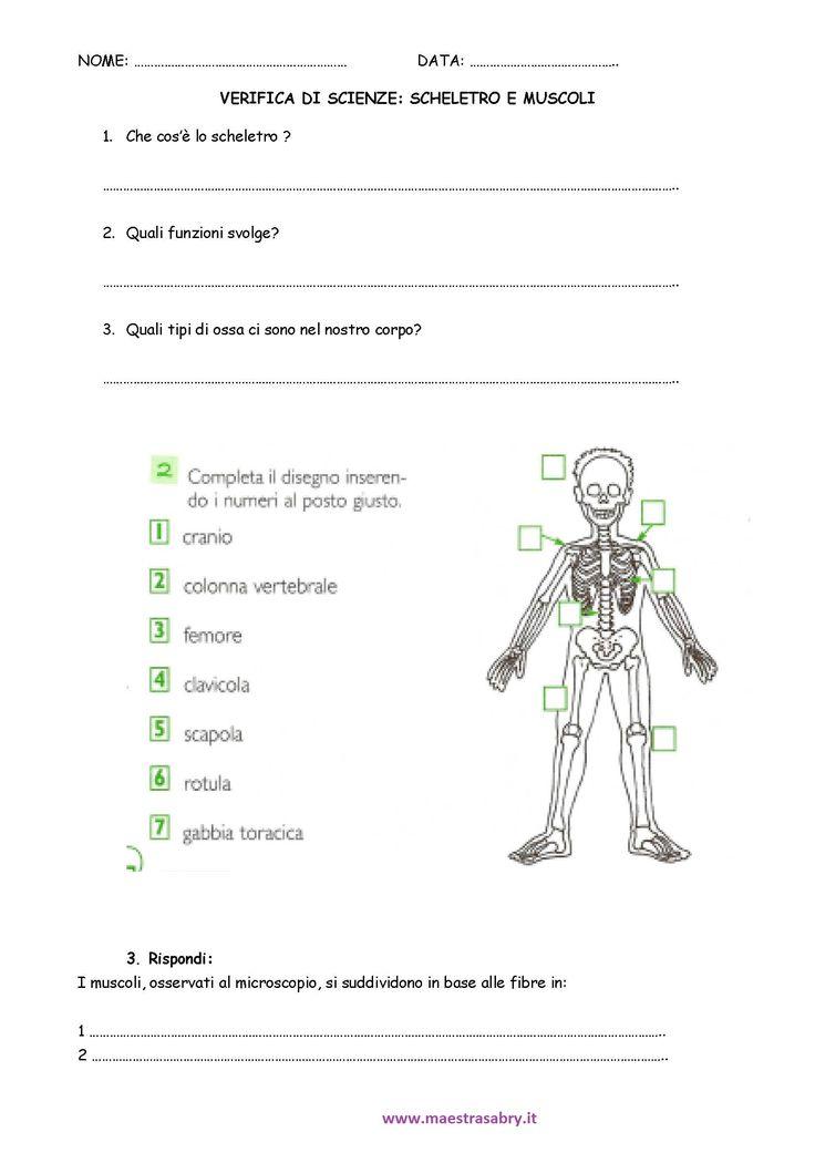 Verifica su muscoli e scheletro