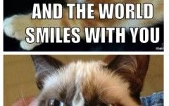 Grumpy Cat Meme About Work About
