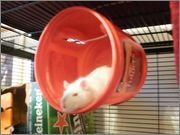 Creative rat cage accessories. (Huts and hanging places.)