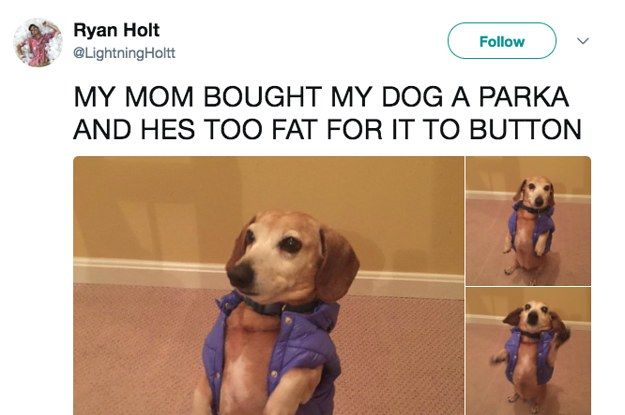 50 Tweets You Re Gonna Love If You Have A Dog Or Know A Dog Dogs