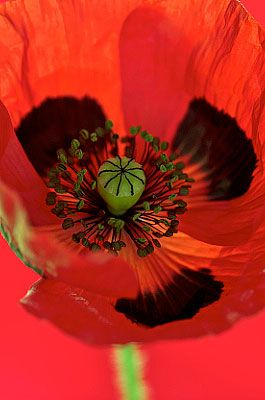 Fine Art flower photography and botanical photography prints on canvas, framed flower photographs, photographic floral greetings cards and Plant Portraits calendar. Contemporary, modern, colourful, artistic and abstract wall art flower portraits by photographer Andy Small.