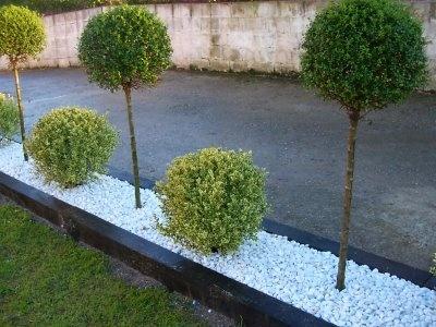 Piedra blanca seto rbol jardin pinterest - Jardin piedras blancas ...
