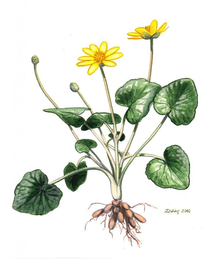 salataboglarka.jpg (1676×2048)
