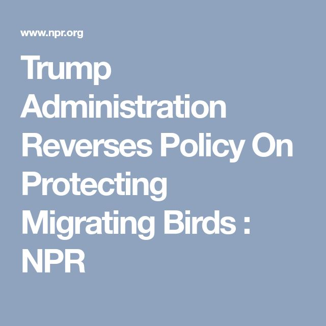 Trump Administration Reverses Policy On Protecting Migrating Birds : NPR