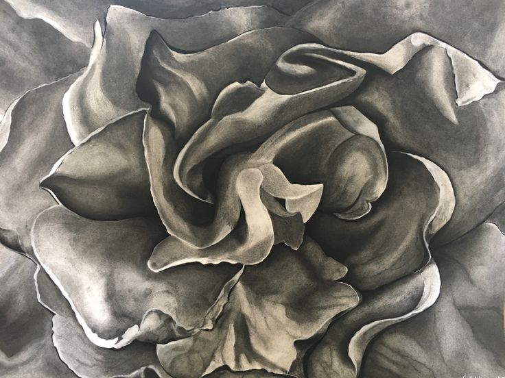 Rubiaceae Family  Young and Emerging Artist Prize, Bowral and District Art Society .  Charcoal, 93 x 72 wf