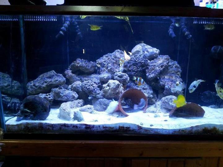 Love fish tank kings fish tank therapy pinterest for Fish tank kings