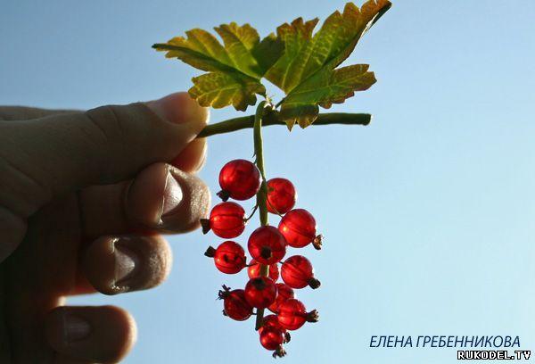 """Bessen """"rode aalbes"""" epoxy hars en polymeer klei - Bloemen van polymeer klei - Polymer Clay - Publisher - Rukodel.TV"""