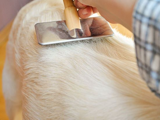How to Groom a Golden Retriever: 10 steps (with pictures)