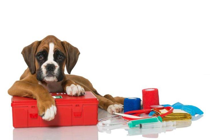 Πώς φτιάχνουμε το κουτί πρώτων βοηθειών για τον σκύλο μας.