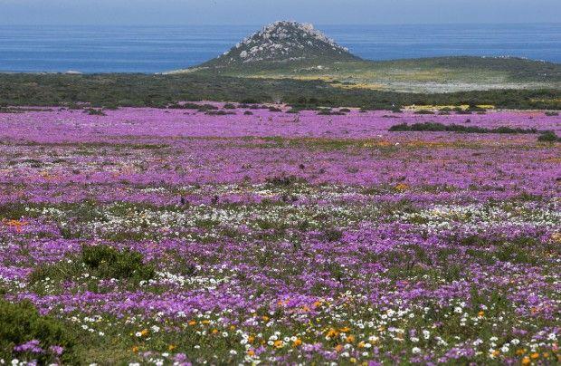 West Coast National Park, South Africa.