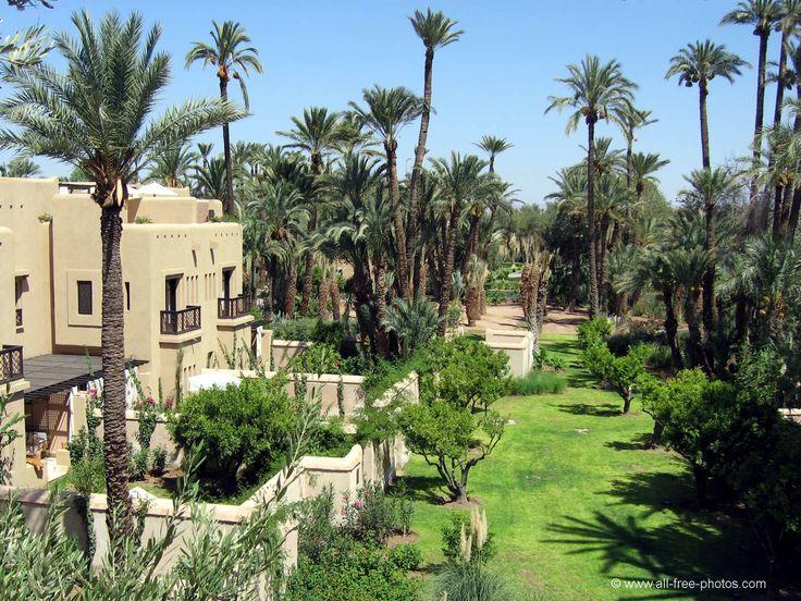Palmeraie - Marrakech - Maroc