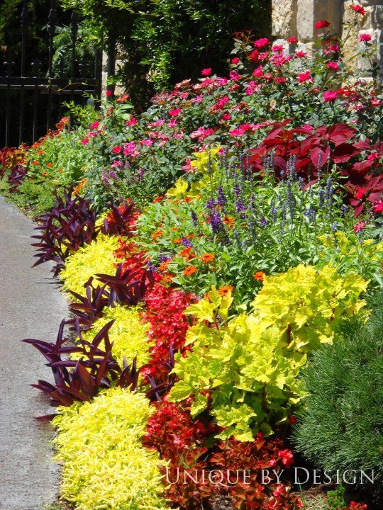 Hot summer color with 'Profusion' zinnias, 'Victoria Blue' salvia, Josephs Coat, Knock Out roses, coleus and begonia.