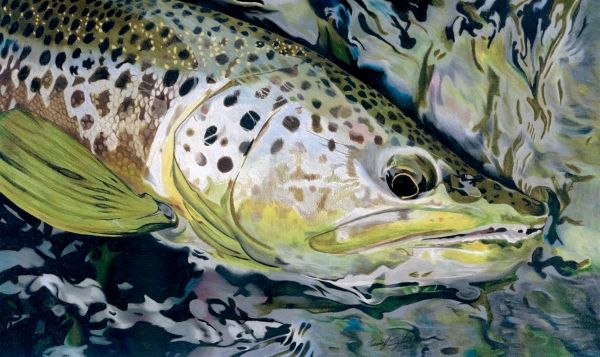 17 best images about travis sylvester on pinterest for Fish in spanish