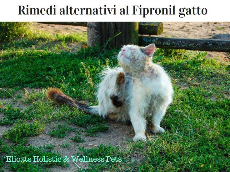 Rimedi alternativi al Fipronil pulci gatto - Elicats