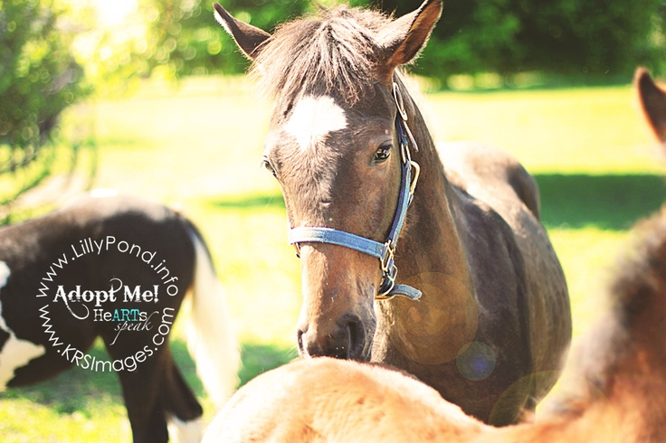 Graylin is an orphaned nurse mare foal who is available for adoption at Lilly Pond Foal Rescue!!  For more information, please visit http://www.lillypond.info (Dunkirk, MD)