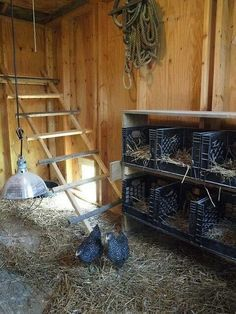 ladder as roost .... I also like this set up for nesting boxes (milk crates)