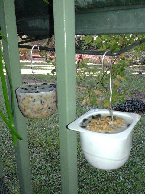 C'est l'heure du petit déjeuner   Recette faire fondre de la végétaline + ajouter un melange de graines pour les oiseaux du ciel, remplir un pot de yaourt, conserver au frais pour fixer la végétaline.  Puis démouler  et accrocher sur un arbre, sur le balcon, rebord de fenêtre..  et voilà  les mésanges, tourterelles, moineaux, rouge-gorges auront de quoi se nourrir pour l'hiver, attention de ne pas oublier de leur mettre une échelle d'eau..