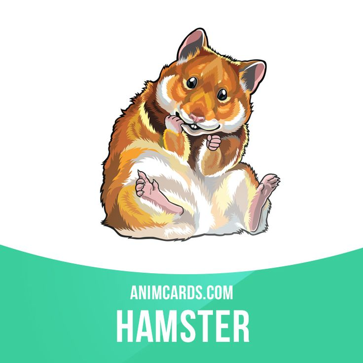 In the wild, hamsters are crepuscular and remain underground during the day to…