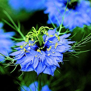 95 Best Flowers In Bloom August And September Images On 640 x 480