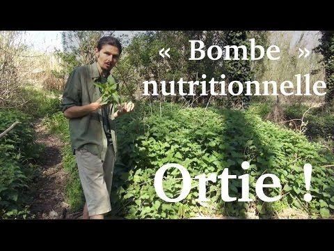 """Jus d'ortie, la """"bombe"""" nutritionnelle du printemps - www.regenere.org - YouTube"""